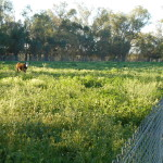 GUMTREE PROPERTY FOR SALE 008