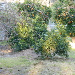 GUMTREE PROPERTY FOR SALE 013