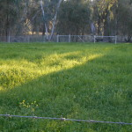 GUMTREE PROPERTY FOR SALE 014
